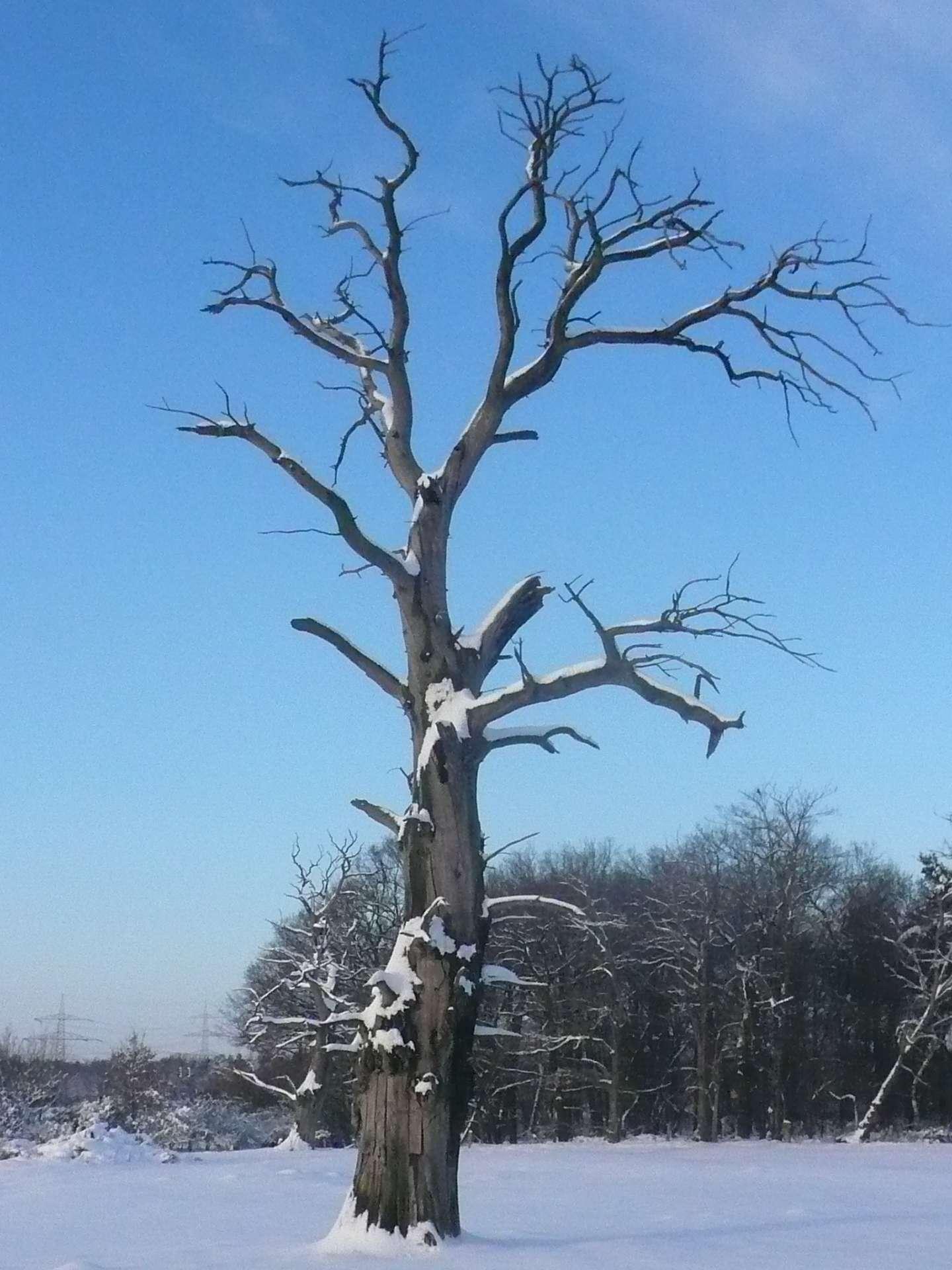 Abgestorbener Baum im Schnee