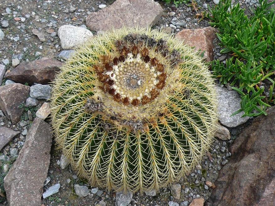 Ein großer Kaktus