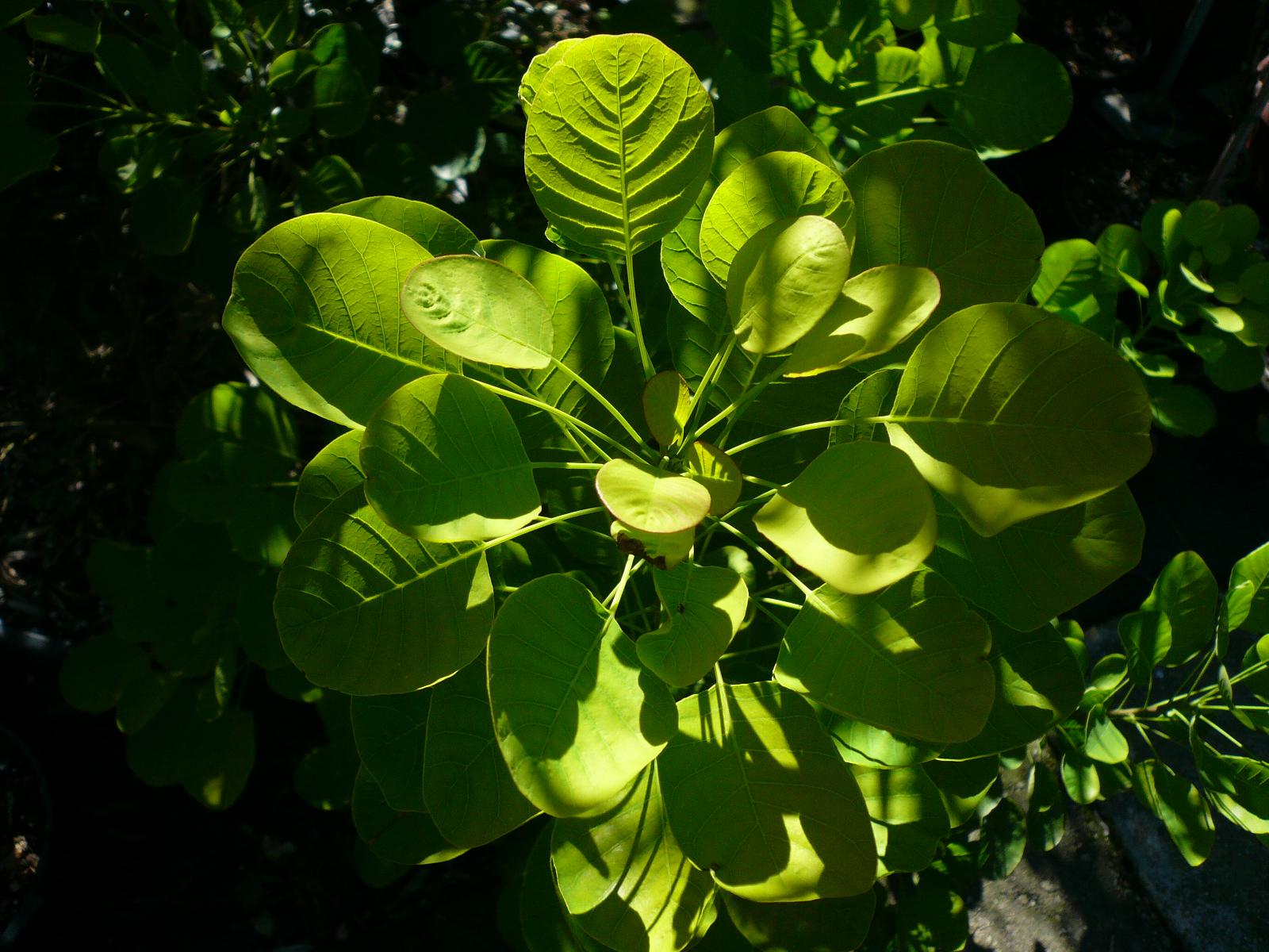 Sonnenlicht spiegelt sich auf einer grünen Pflanze