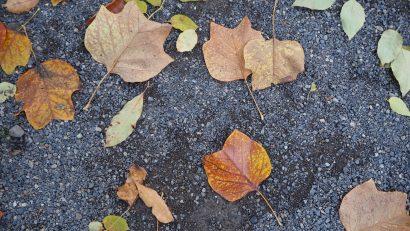 Herbstblätter auf Boden