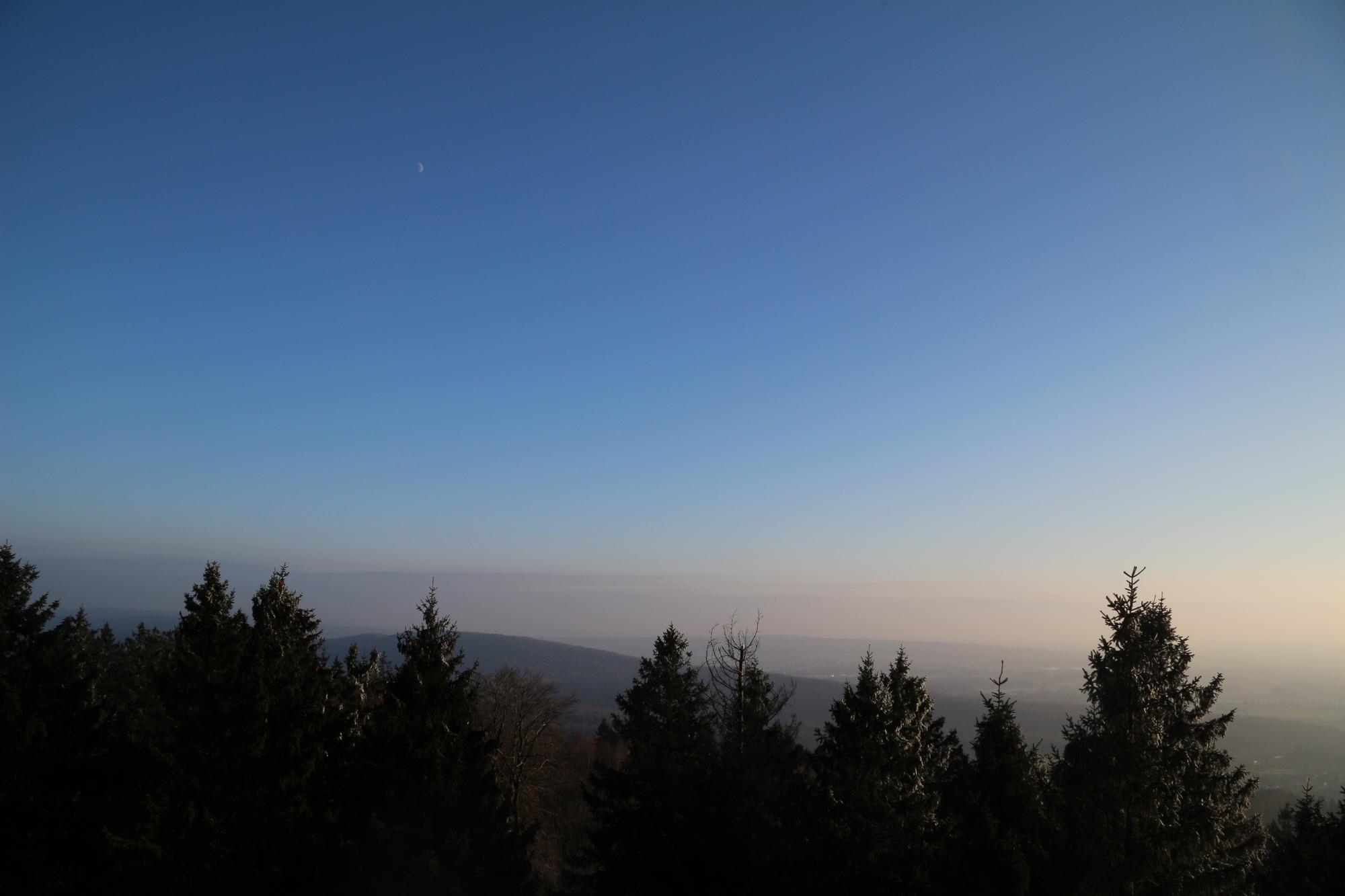 Wald mit blauem Himmel und Sonnenuntergang